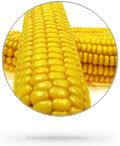 round_corn